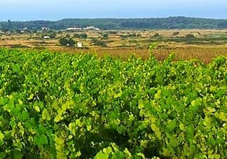 A walk in Vendee with two star Michelin Chef and a biodynamic Winemaker
